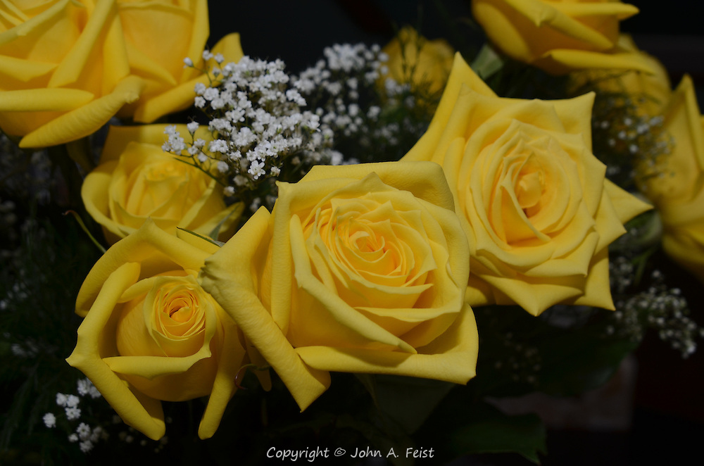 Part of a larger bouquet of yellow roses.  Hillsborough, NJ