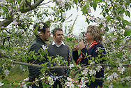 France Jumeauville. la ferme du logis . Mme Cochin the owner talk about apples with Hugues Pouget and Sylvain Blanc ( Victor and Hugo Cie) near apple trees in flowers