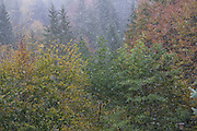 snow falling, autumn, seasons changing, first snowfall, Romania.