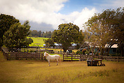 Ranch, Makawao, Haleakala, Maui, Hawaii
