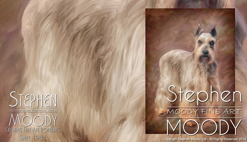 Mini Schnauzer Pet Portraits by Stephen Moody - Scottsdale Portrait Artist and Master Photographer, Scottsdale, AZ