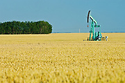wheat field and oil pump jack<br /> Carlyle<br /> Saskatchewan<br /> Canada