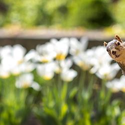 Spring campus scenics