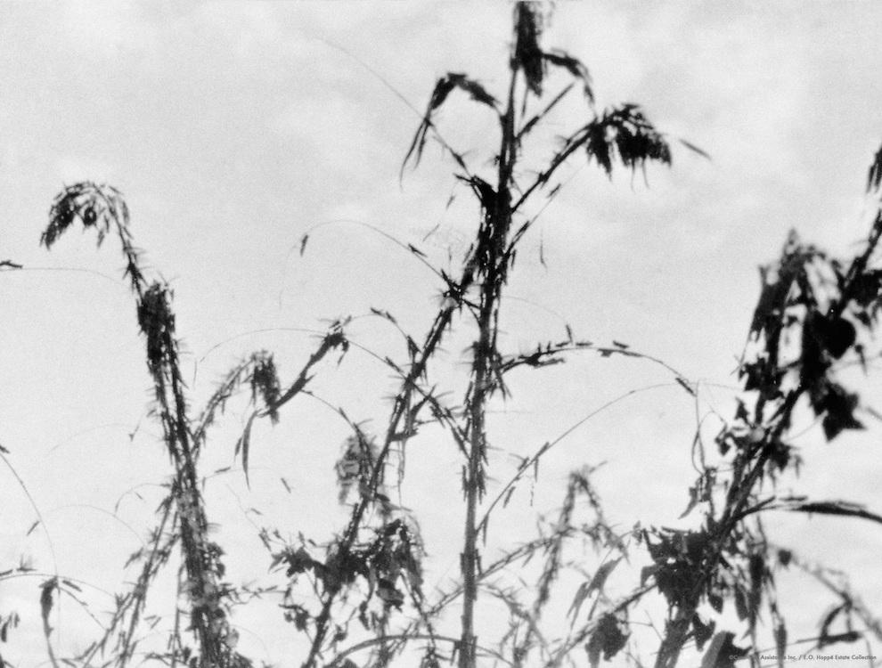 Swarm of Locusts, Tanga, Tanganyika (now Tanzania), Africa, 1937