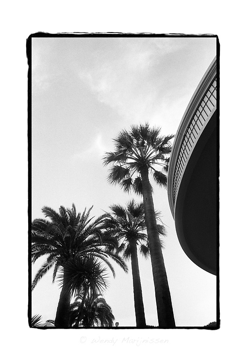 Palm trees near the Martinez hotel. Cannes, France, 2008