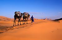 Maroc, Tafilalt, Merzouga et desert de l'Erg Chebbi, Randonnée chameliere - Caravane