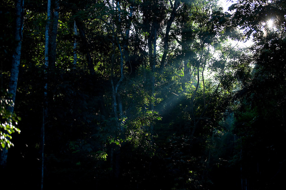 Linhares_ES, Brasil...Reserva Natural da CVRD (Companhia Vale do Rio Doce)...Natural Reserve of CVRD (Companhia Vale do Rio Doce)...Foto: LEO DRUMOND /  NITRO