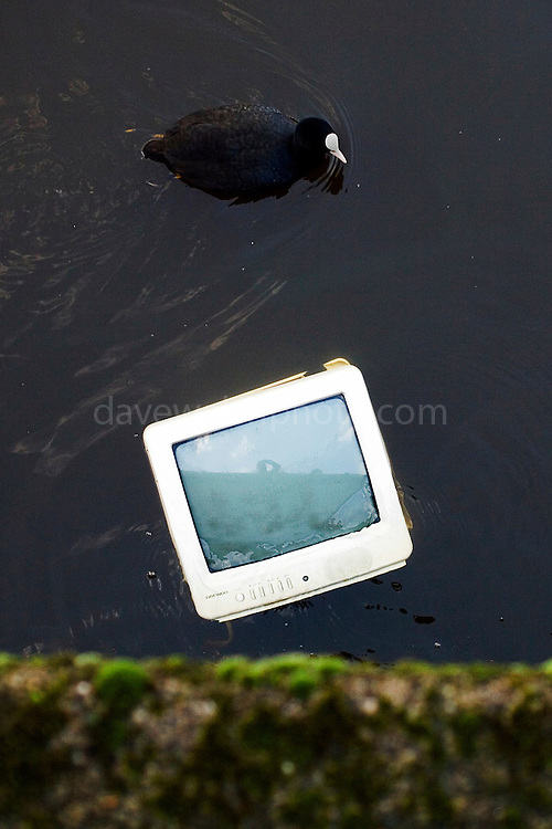 Coot swimming by discarded television in an Amsterdam canal