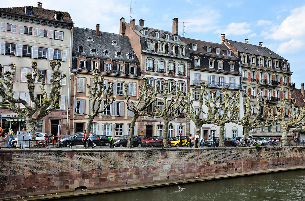 Pruned Sycamore Trees Along Quai in Strasbourg, France<br />
