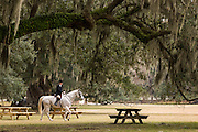 A rider in the fox hunt at Middleton Place Plantation in Charleston, SC.