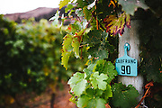 Cab Franc vines at Gold Hill Winery