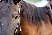 Close up shot of horse eye and head.