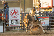Chris Bechthold takes his reride during the Xtreme Bulls event at the Elizabeth Stampede on Friday, June 1, 2018.