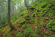 Acadian Forest interior<br /> Fundy National Park<br /> New Brunswick<br /> Canada
