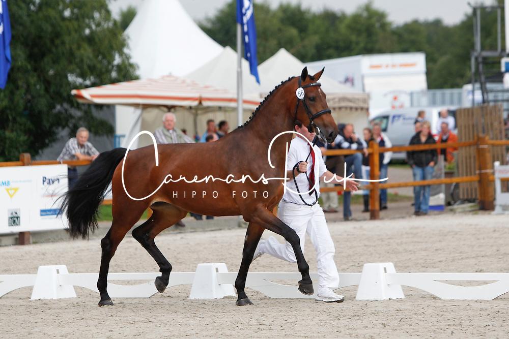 056 - Casinaa<br /> KWPN Paardendagen Ermelo 2010<br /> © Dirk Caremans