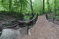 Woodland path in the Ramble of Central Park