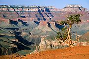 Mesas and pine tree along South Kaibab Trail, Grand Canyon National Park, Arizona, USA.