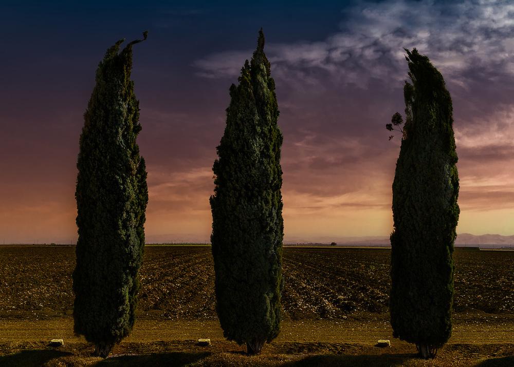 Tres Arbores