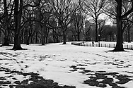 Snow under the American Elms at the Mall in Central Park