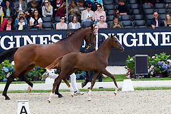Veiling<br /> World Championship Young Dressage Horses <br /> Ermelo 2016<br /> © Hippo Foto - Leanjo de Koster<br /> 29/07/16