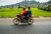 12 MARCH 2013 - ALONG HIGHWAY 13, LAOS:  A motorcyclist on Highway 13 passes green rice fields. The paving of Highway 13 from Vientiane to near the Chinese border has changed the way of life in rural Laos. Villagers near Luang Prabang used to have to take unreliable boats that took three hours round trip to get from the homes to the tourist center of Luang Prabang, now they take a 40 minute round trip bus ride. North of Luang Prabang, paving the highway has been an opportunity for China to use Laos as a transshipping point. Chinese merchandise now goes through Laos to Thailand where it's put on Thai trains and taken to the deep water port east of Bangkok. The Chinese have also expanded their economic empire into Laos. Chinese hotels and businesses are common in northern Laos and in some cities, like Oudomxay, are now up to 40% percent. As the roads are paved, more people move away from their traditional homes in the mountains of Laos and crowd the side of the road living off tourists' and truck drivers.    PHOTO BY JACK KURTZ