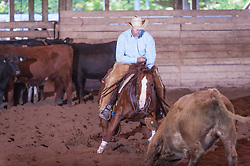 September 23, 2017 - Minshall Farm Cutting 5, held at Minshall Farms, Hillsburgh Ontario. The event was put on by the Ontario Cutting Horse Association. Riding in the Open Class is Eric Van Boekel on Mister Boss Hog owned by the rider.