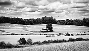 A quaint little barn sits in the center of large wheat field.  The tree line, hedges and cloudy sky nicely segment the composition.  The image was post processed to emulate Agfa APX 100 film.