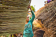 15 MARCH 2013 - ALONG HIGHWAY 13, LAOS: People in a small village on Highway 13 work together to put new thatch on a neighbor's roof. Although many people still use traditional means of home construction, like thatch and lumber, more and more people along the highway are using tin roofs and cement posts for their homes. The paving of Highway 13 from Vientiane to near the Chinese border has changed the way of life in rural Laos. Villagers near Luang Prabang used to have to take unreliable boats that took three hours round trip to get from the homes to the tourist center of Luang Prabang, now they take a 40 minute round trip bus ride. North of Luang Prabang, paving the highway has been an opportunity for China to use Laos as a transshipping point. Chinese merchandise now goes through Laos to Thailand where it's put on Thai trains and taken to the deep water port east of Bangkok. The Chinese have also expanded their economic empire into Laos. Chinese hotels and businesses are common in northern Laos and in some cities, like Oudomxay, are now up to 40% percent. As the roads are paved, more people move away from their traditional homes in the mountains of Laos and crowd the side of the road living off tourists' and truck drivers.   PHOTO BY JACK KURTZ