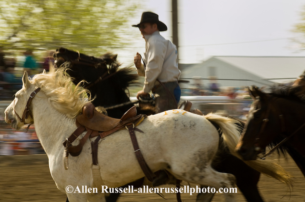 Pickup man Kyle Shaw picks up saddle bronc, Miles City Bucking Horse Sale, Montana, <br /> MODEL RELEASED