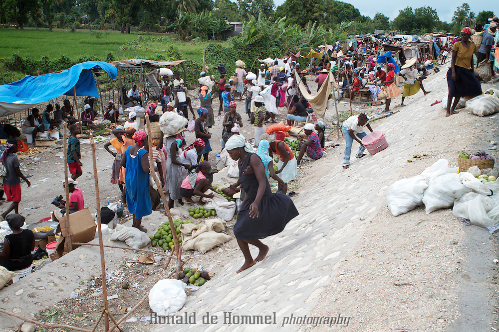 Rice Harvesting in Artibonite, the major rice growing area of Haiti. Due to cheap rice imports from the USA, the agricultural sector in Haiti was nearly destroyed. The aftermath of the earth quake of January 12 2010 might be a good moment to take up the restructuring of the agricultural sector in the country to make it more self sustainable for the future.