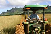 Kipu Ranch, Kauai<br />