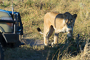 Savuti National Park, Botswana
