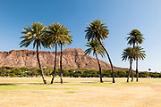 A horizontal image showing eight palm trees in front of Diamond Head Crater on the island of Oahu in Hawaii.