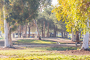 Picnic Tables at Earvin Magic Johnson Recreation Area