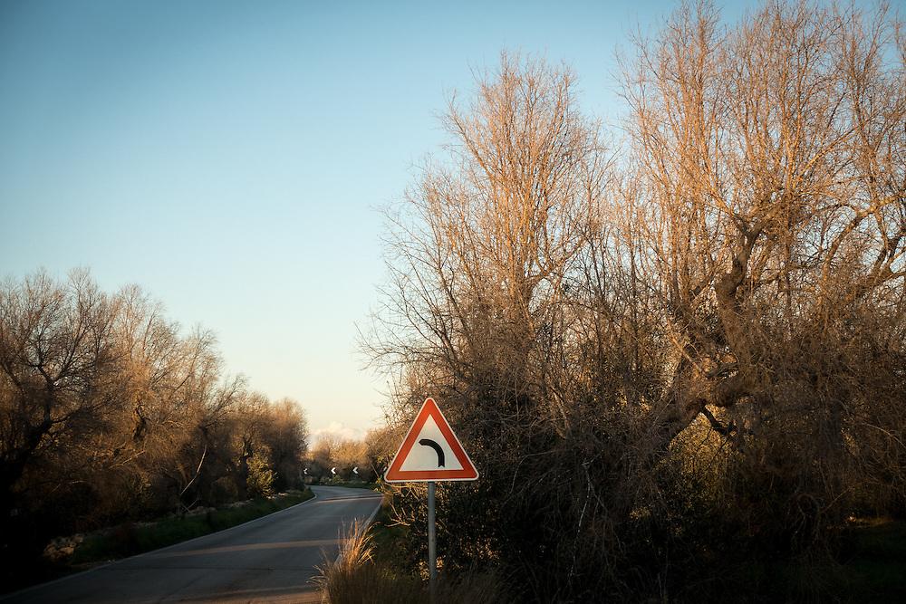 Italy- Italien - APULIEN; Das sog. Feuerbakterium, Xylella Fastidiosa, lässt viele OLivenbäume im Salento, nahe des Urlaubsortes Gallipoli erkranken. Noch ist völlig unklar wie es zur Verbreitung des Bakteriums gekommen ist. Vermutet wird auch ein Zusammenhang mit Bauspekulation und Mafia; The socalled XYLELLA bacterium is destroying olive trees in Salento/Puglia; Hier: erkrankte Olivenbäume trocknen aus, sterben ab - wurden von den Bauern beschnitten, um die Ausbreitung der Krankheit zu stoppen; Gallipoli, 07.01.2016