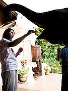 Feeding bananas to baby elephants on the  breakfast terrace.
