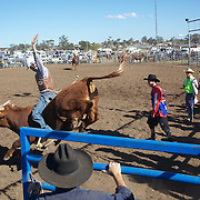 Action from the Novice Bull Riding Event at the Branxton Rodeo at Branxton, Hunter Valley,  New South Wales, Australia, on Saturday 17th October 2009.  Photo Tim Clayton.