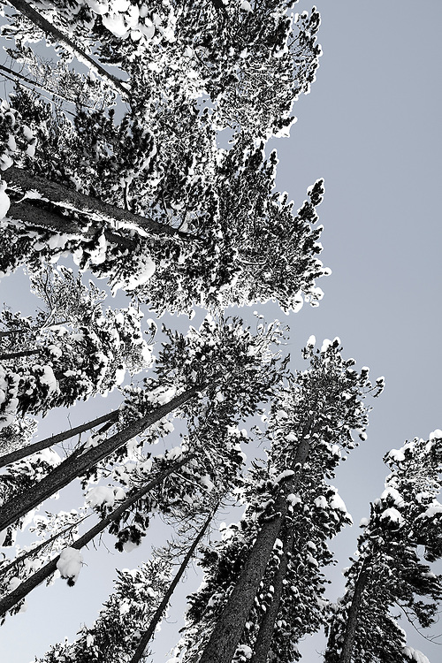 winter landscape photography by Tracie Spence called 'Paradise'