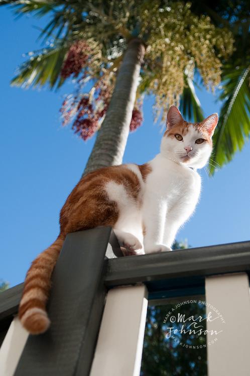 Pet cat balancing on verandah railing