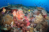 Healthy Hard and Soft Coral slope