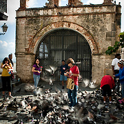 A boy wearing a red shirt feeds pigeons.  Home to hundreds of pigeons, Parque de las Palomas (Pigeon's Park), is located near the Paseo de la Princesa in Old San Juan, Puerto Rico, and is a popular destination for tourists and locals alike.