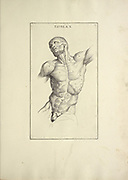front torso woodcut print of Human Anatomy from Anatomia per uso et intelligenza del disegno printed in Rome in 1691