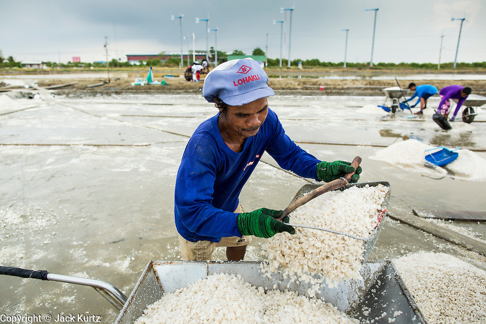 24 APRIL 2013 - SAMUT SONGKHRAM, SAMUT SONGKHRAM, THAILAND: A worker loads salt into a wheelbarrow during the salt harvest in Samut Songkhram, Thailand. The 2013 salt harvest in Thailand and Cambodia has been impacted by unseasonably heavy rains. Normally, the salt fields are prepped for in December, January and February, when they're leveled and flooded with sea water. Salt is harvested from the fields from late February through May, as the water evaporates leaving salt behind. This year rains in December and January limited access to the fields and rain again in March and April has reduced the amount of salt available in the fields. Thai salt farmers are finishing the harvest as best they can, but the harvest in neighboring Cambodia ended 6 weeks early because of rain. Salt has traditionally been harvested in tidal basins along the coast southwest of Bangkok but industrial development in the area has reduced the amount of land available for commercial salt production and now salt is mainly harvested in a small part of Samut Songkhram province.      PHOTO BY JACK KURTZ