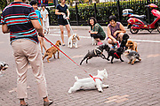 Chinese women play with their dogs in the old French Concession of Shanghai, China