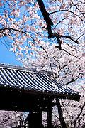 Myokoji Temple, Hakata
