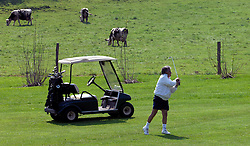 NORMANDY, FRANCE - MAY-01-2007 - David Sabbag of Australia, has some bovine company as he makes his approach shot on the 4th hole at the Omaha Beach Golf Club - Course: La Mer (The Sea) - Hole 4 - 334 yards - Par 4.(Photo © Jock Fistick)