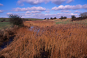 A795MB Reeds, marshes and drainage ditches Hollesley Suffolk England