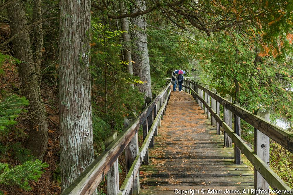 Boardwalk through Northwoods at Tahquamenon Falls, Tahquamenon Falls State Park, Upper Peninsula, Michigan
