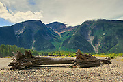 Driftwood amd mountaine along the shoreline of the Skeena River<br />