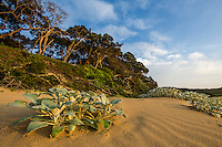 Coastal forest and beach vegetation at Dwesa-Cwebe Marine Protected Area,  Eastern Cape, South Africa